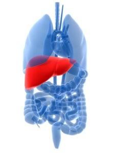 cuidado-higado-metabolismo
